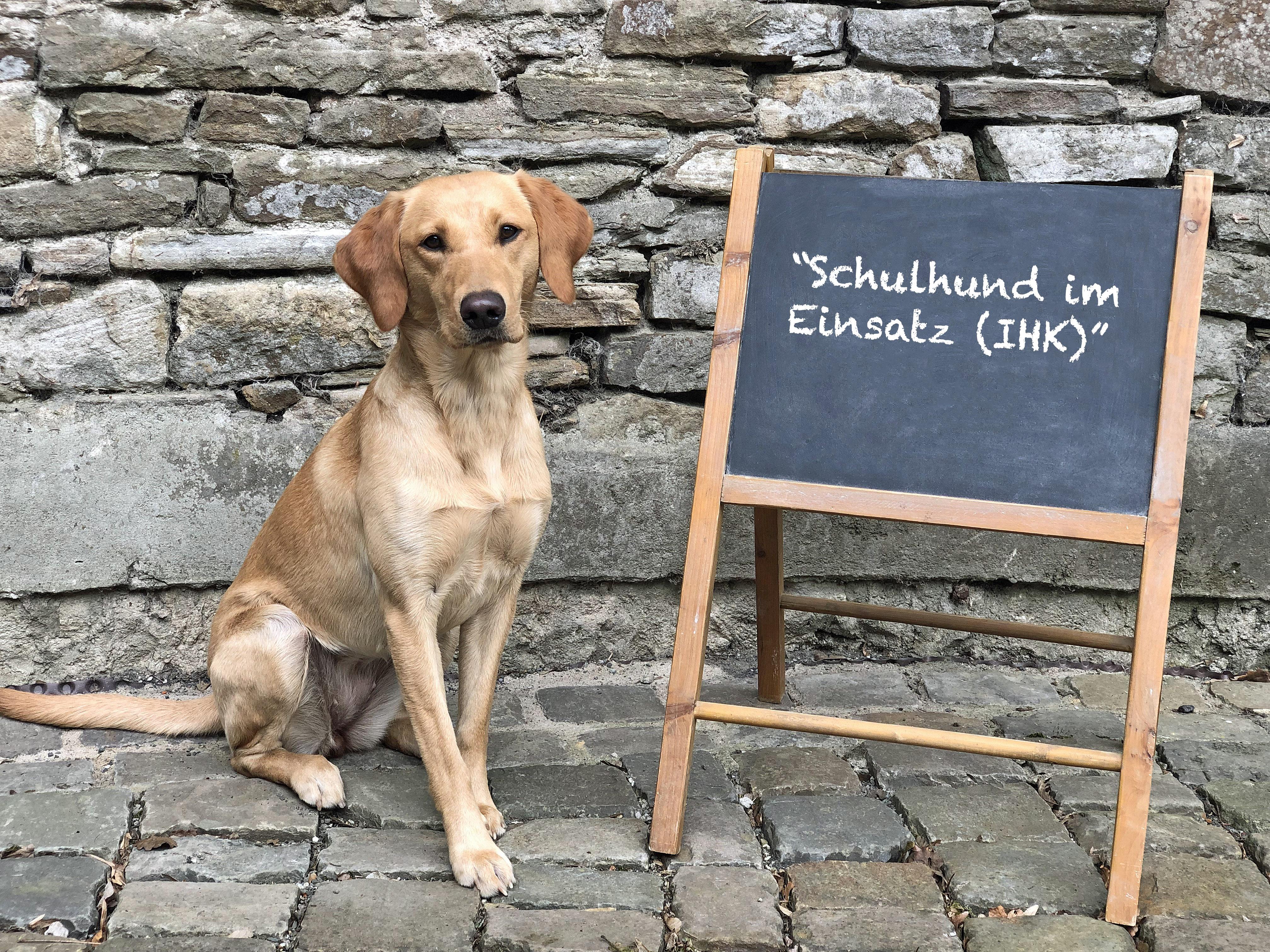 Lehrgang Schulhund im Einsatz (IHK)