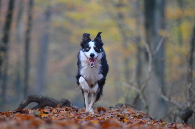 Angeborene Verhaltensmuster – Der jagende Hund