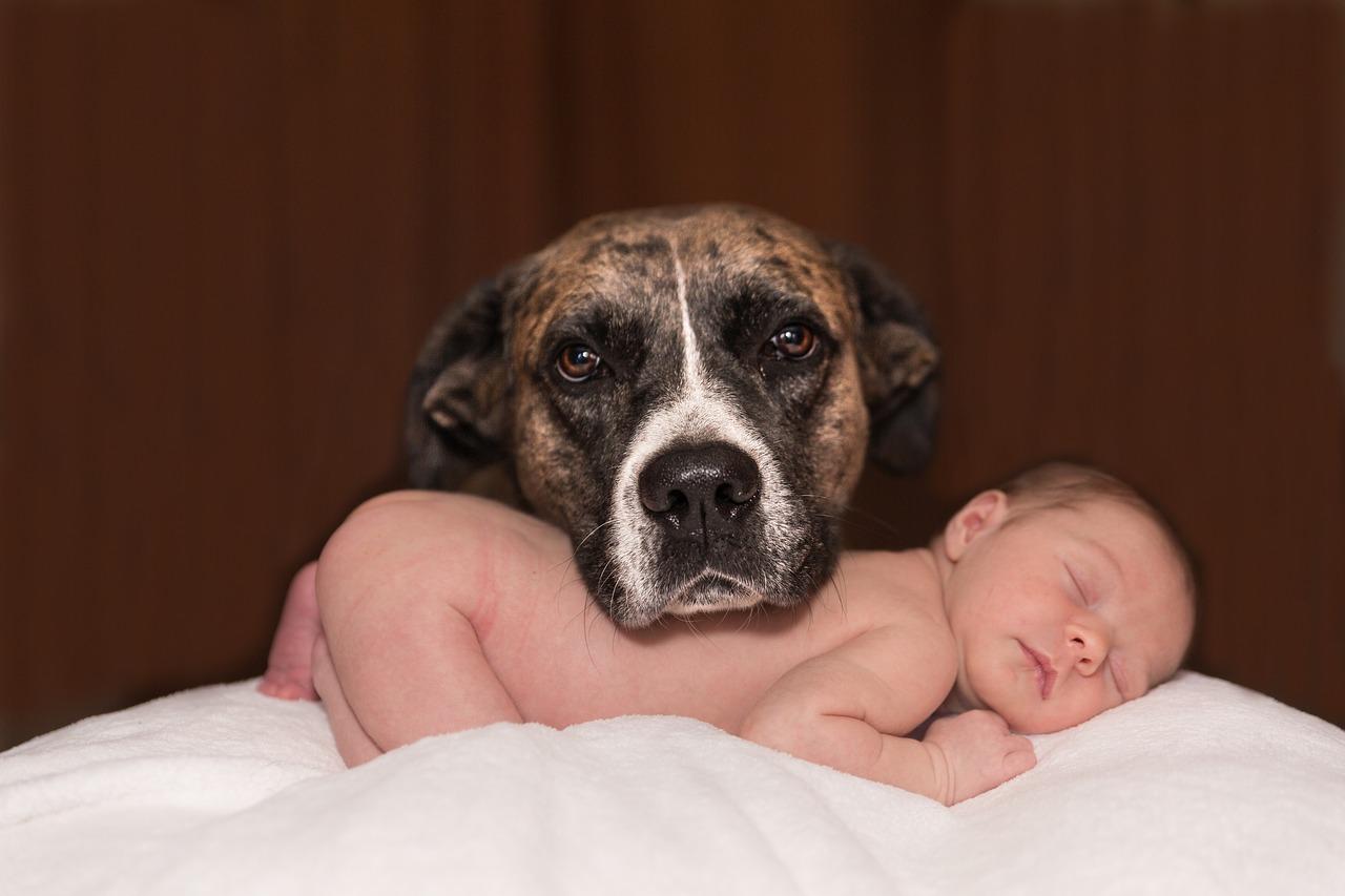 DOGS & BABIES - für Eltern mit Kleinkind bis 3 Jahre