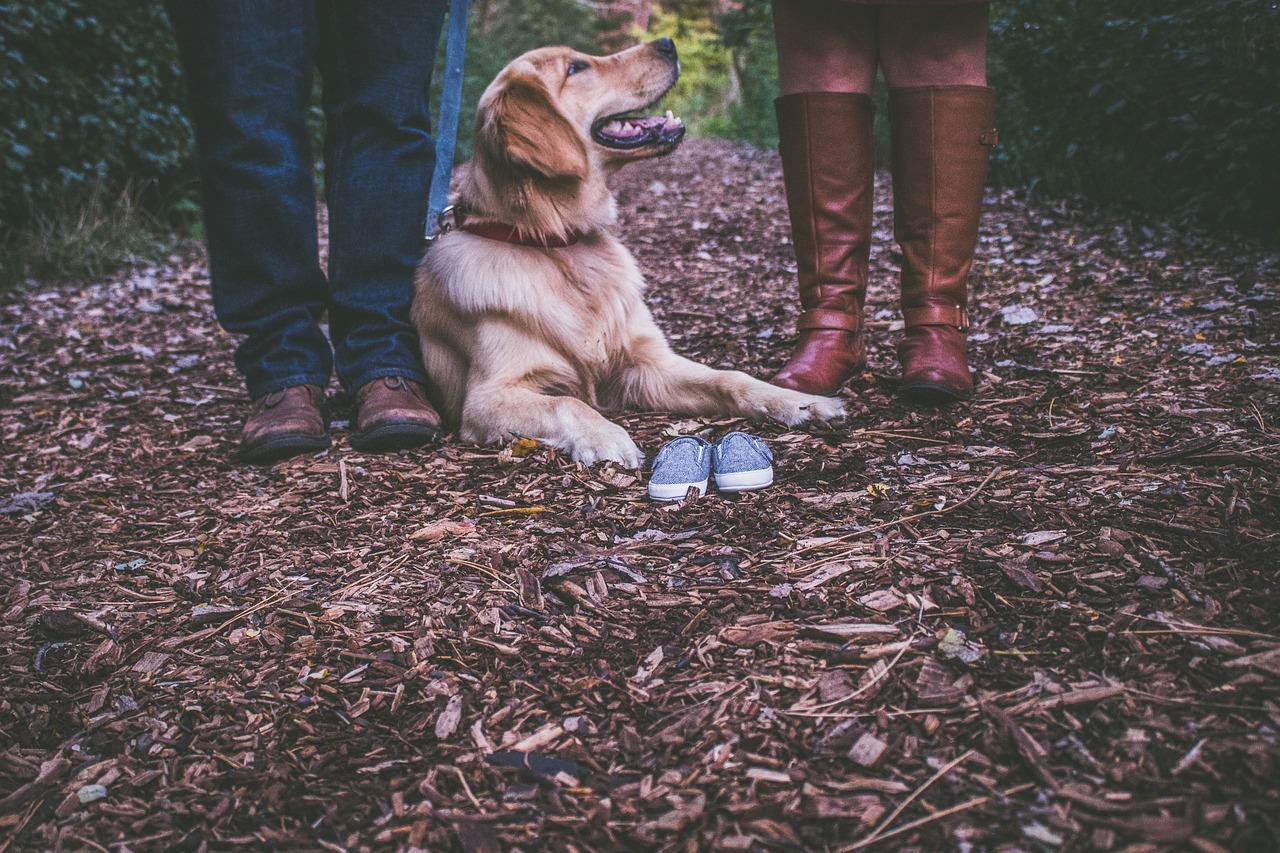 DOGS & STORKS - Schwanger mit Hund