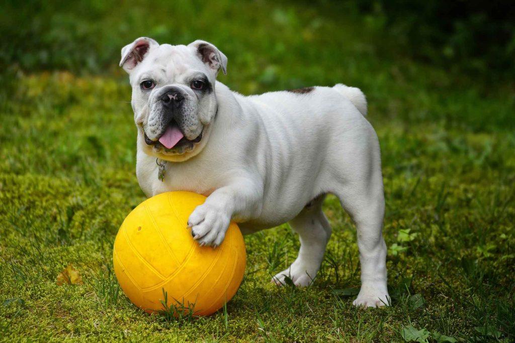 Weiterbildung Sportfreund Hund