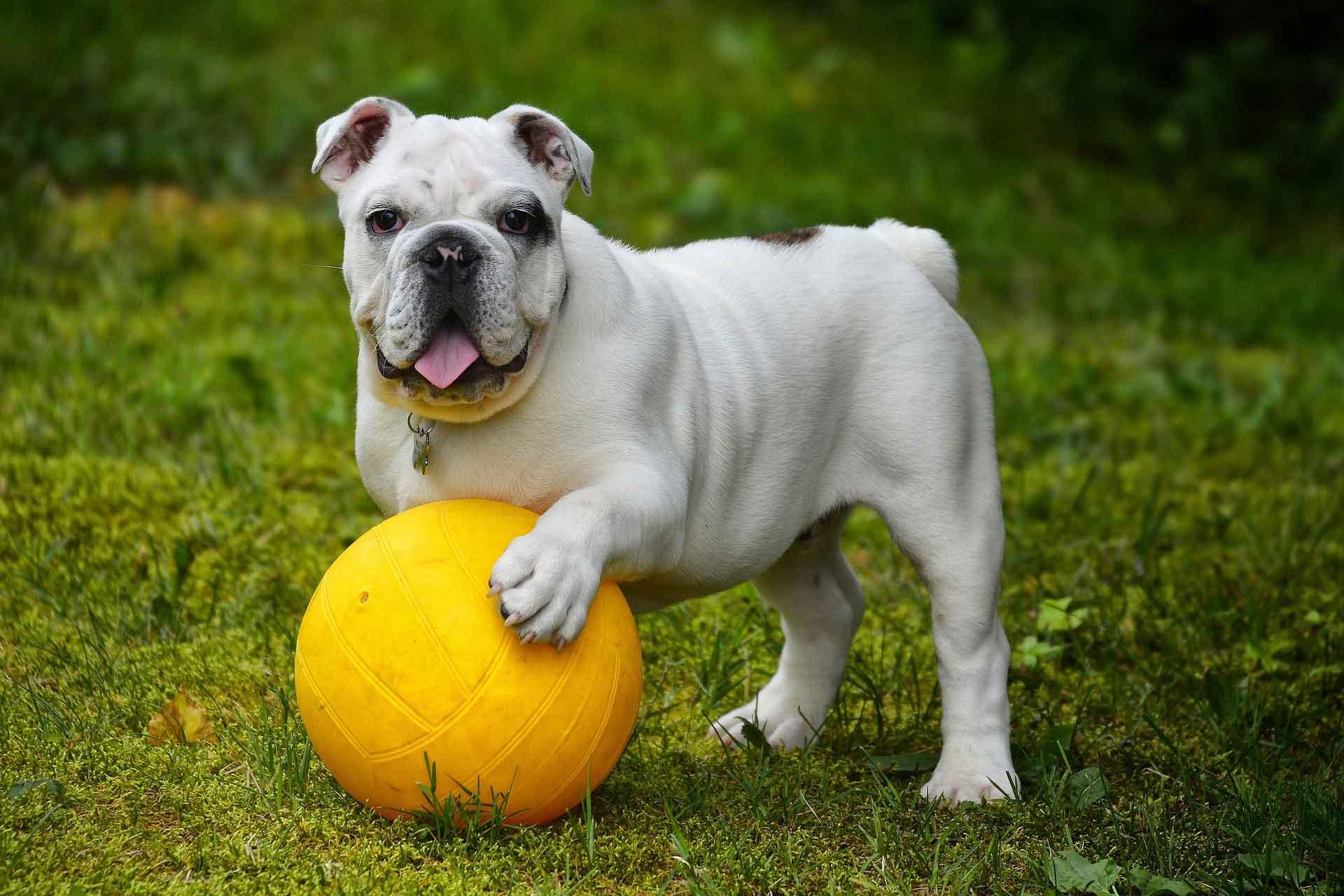 """Weiterbildung """"Sportfreund Hund"""" - Blockseminar"""