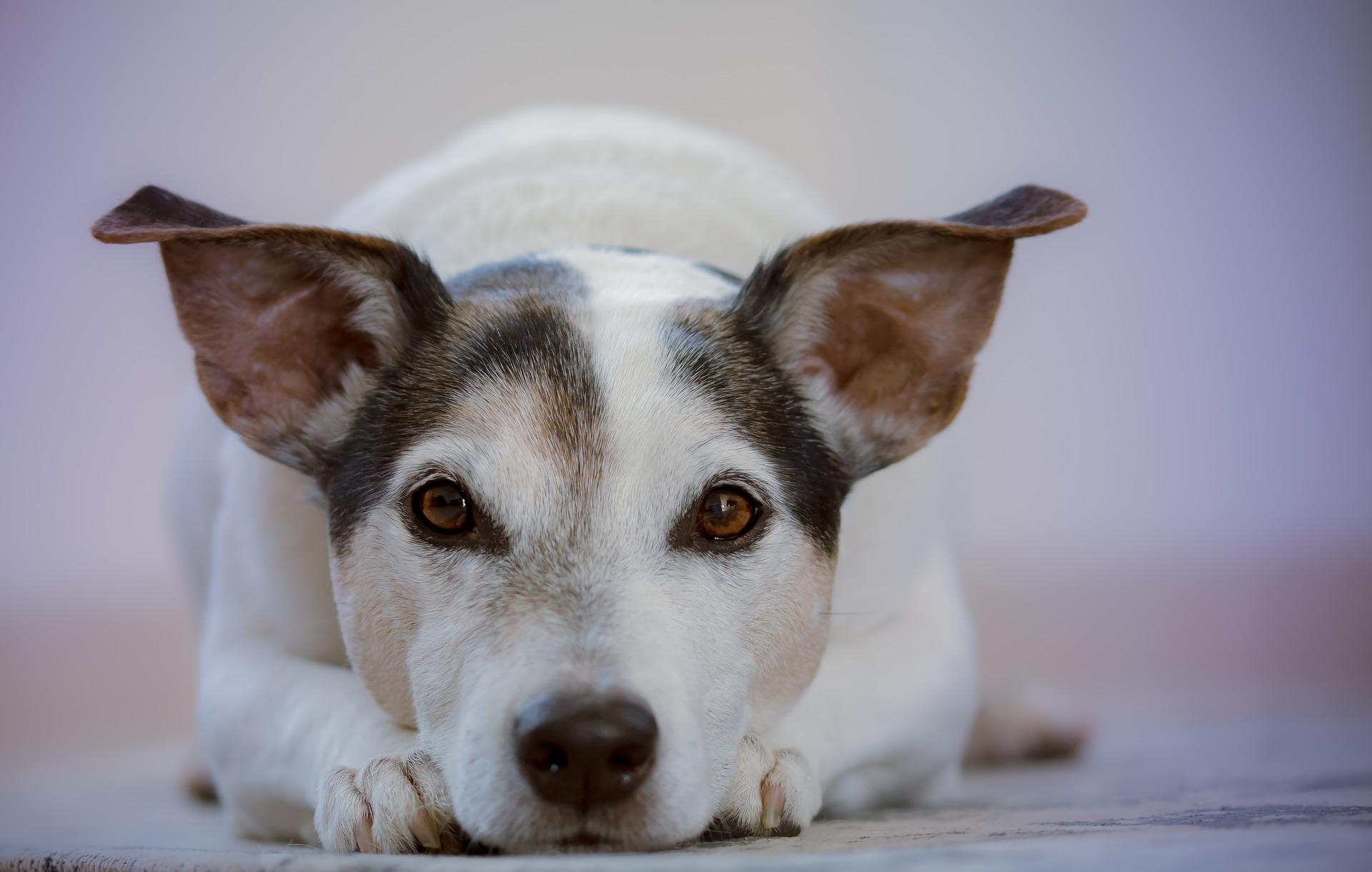 """Wochenendworkshop """"Sprich mit mir: Die Körpersprache des Hundes"""""""