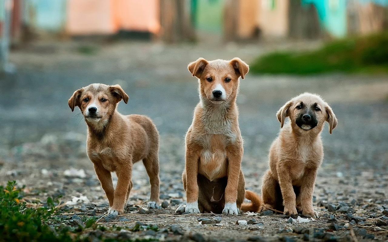 """Workshop """"Tierheimhunde/Tierschutzhunde"""" mit Chirag Patel"""