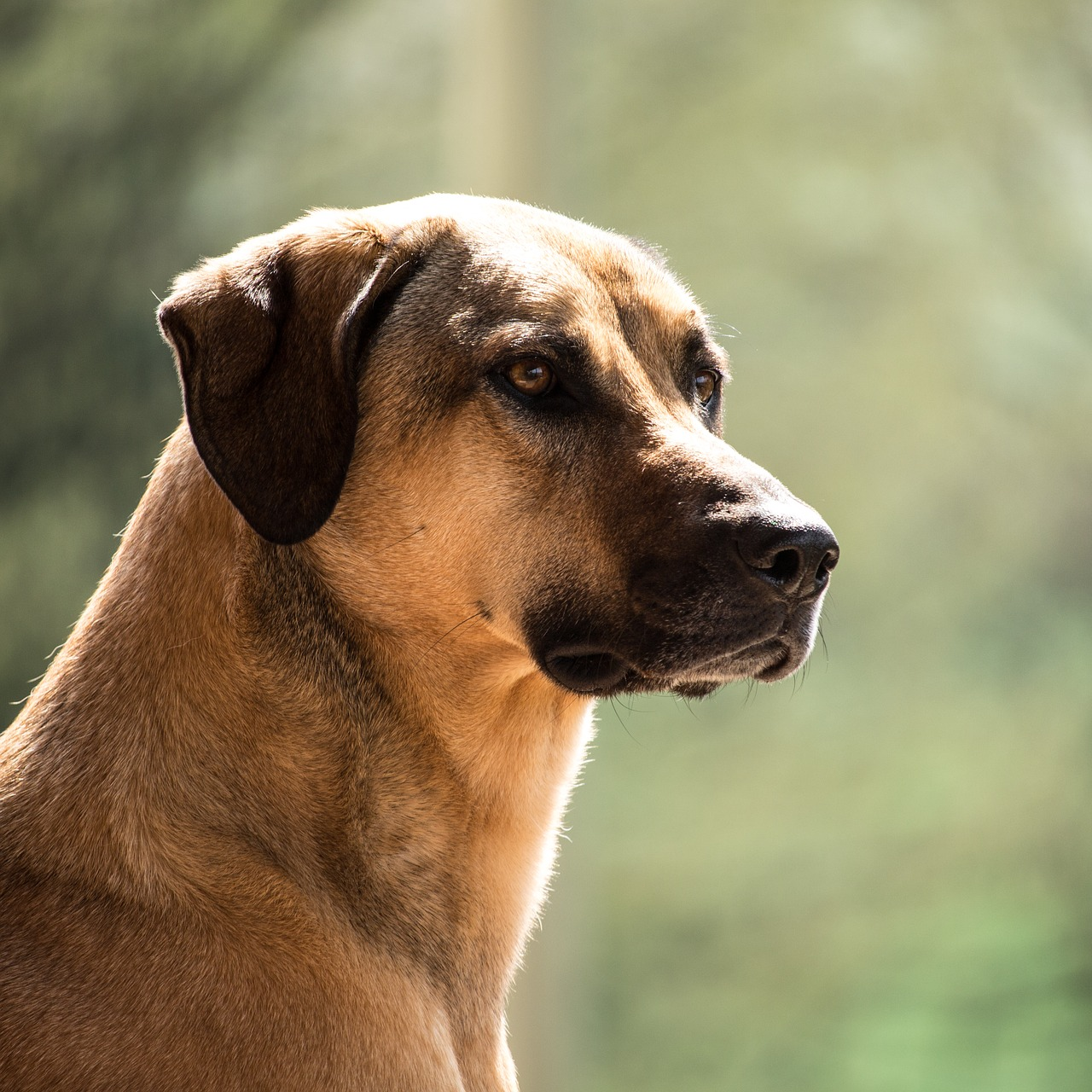 """Herdenschutzhunde"""