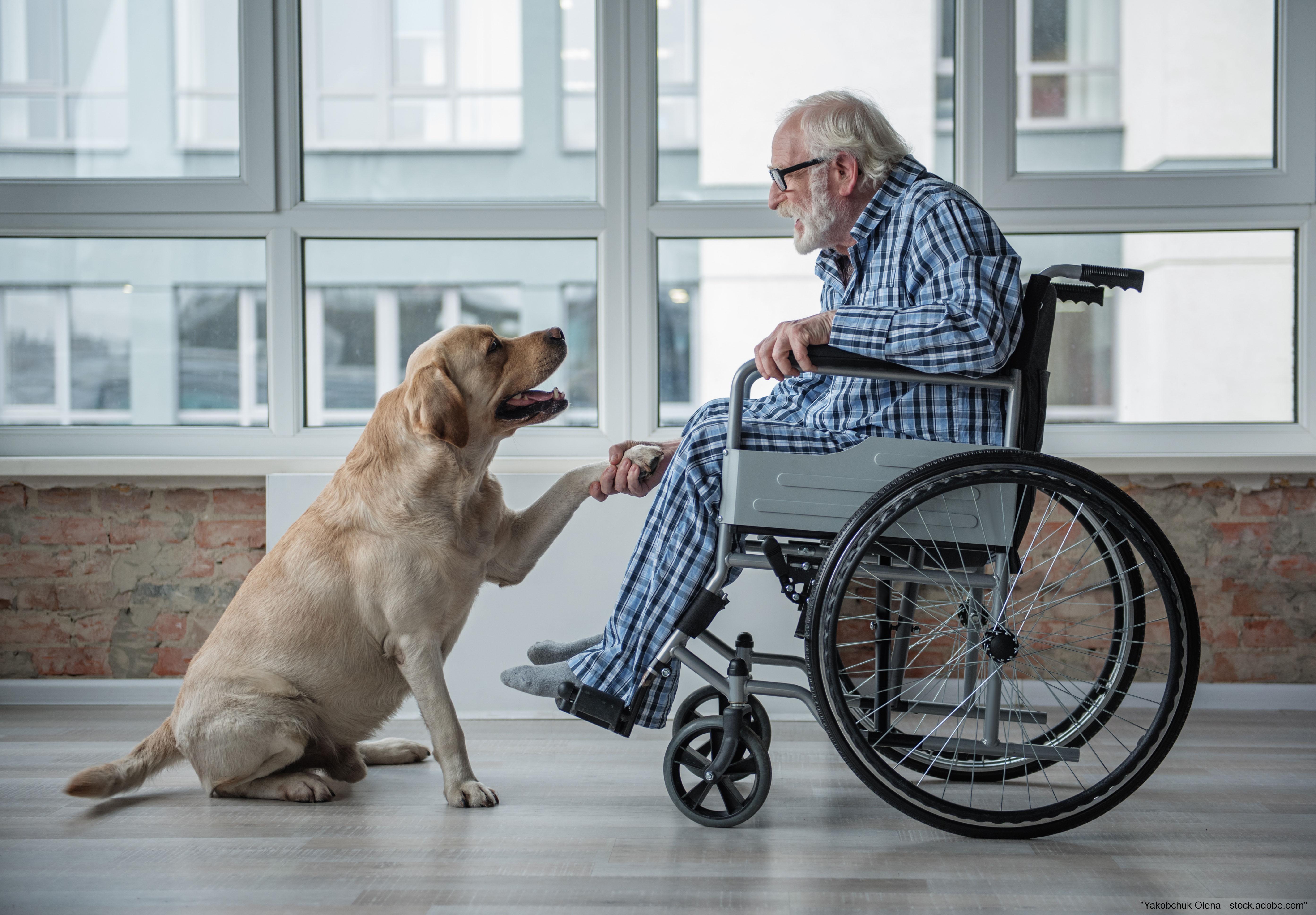 Besuchs- und Therapiehunde Lehrgang
