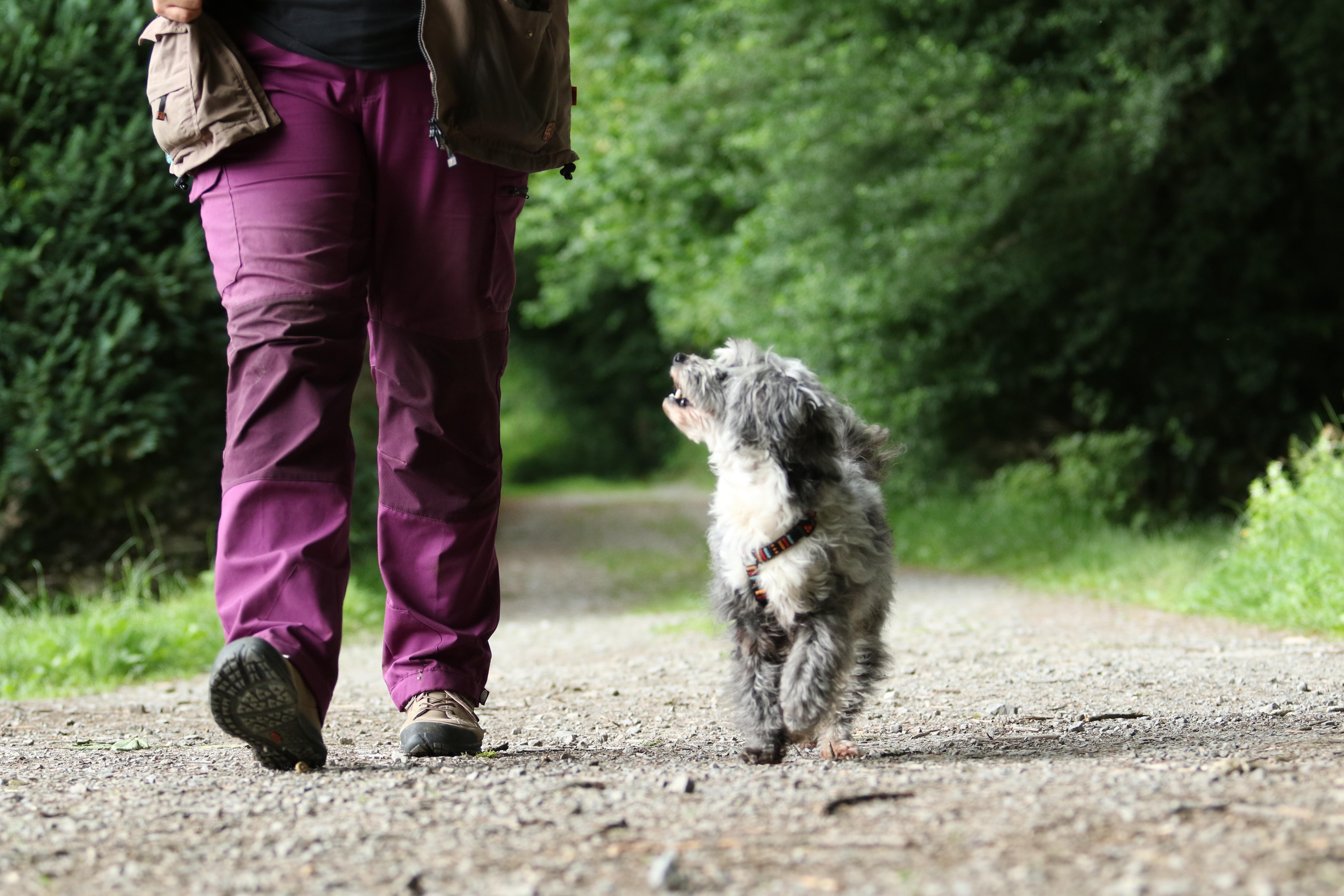 Prüferschulung BHV-Hundeführerschein - Neuprüfer*