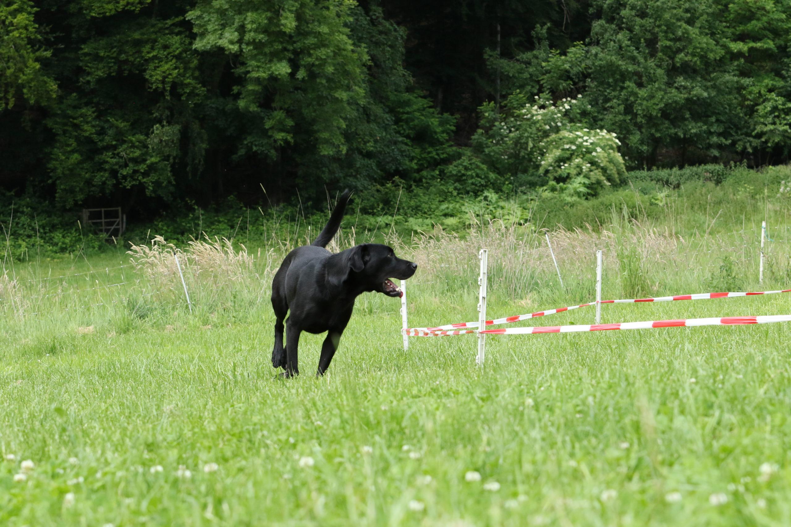 Zusatzqualifikaton für Hundetrainer/innen Longiertraining für den Hund mit Pia Gröning