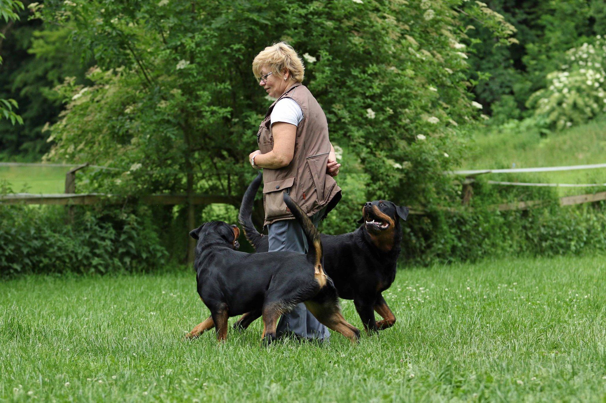 Dogdance Trainerausbildung Modul 1 bis 3