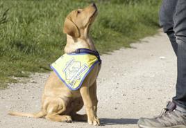 Assistenzhunde - Mein Assistent ist ein Hund (2 Tages-Onlineseminar)