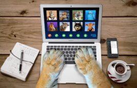 Vorbereitung Sachkundeprüfung §11 TierSchG - online!